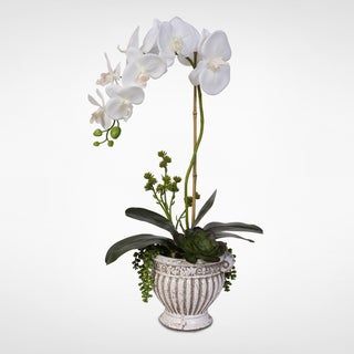 Real Touch Phalaenopsis Silk Orchid Arrangement with Succulents in a Ceramic Pot