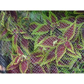 Dewitt BB1414 14 feet x 14 feet Bird Barricade Protective Plant Netting
