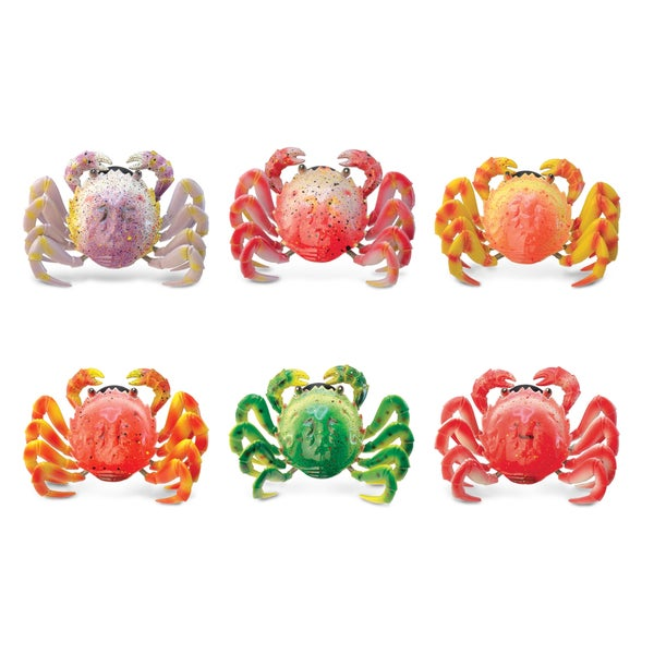 Puzzled Inc. Wild Crab Multicolored Plastic Bobble Magnet (set of 6)