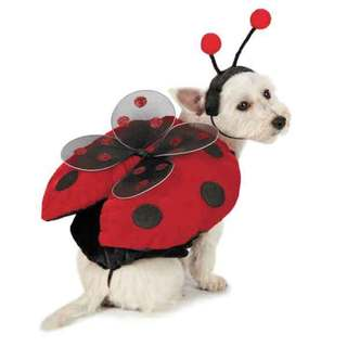 Casual Canine Red and Black Ladybug Dog Costume with Wings and Antennae