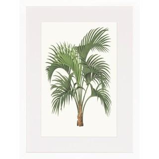 Palm Plants' Framed Art Print