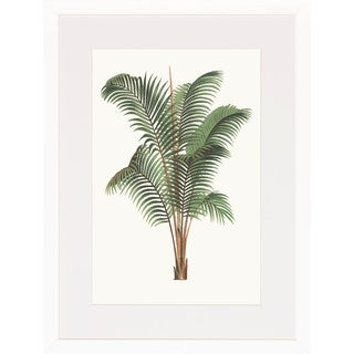 Oswald de Kerchove de Denterghem 'Palm Plants' Framed Art Print