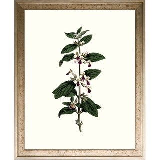 'Floral Studies' Framed Art Print