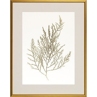 Art Virtuoso 'Gold Foil Algae' Framed Art Print