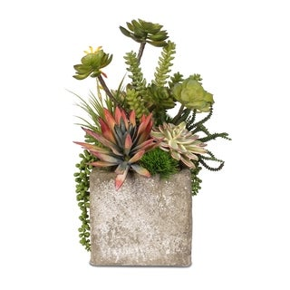 Colorful Succulent Arrangement in a Ceramic Cube