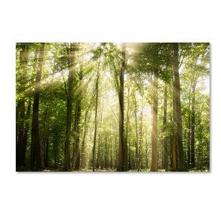 PIPA Fine Art 'Sunrays Through Treetops' Canvas Art