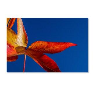 PIPA Fine Art 'Fall Colors' Canvas Art