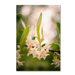 PIPA Fine Art 'Floral Tranquility' Canvas Art