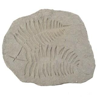 Fern Fossil Off-white Cement 15-inch x 12-inch x 1.5-inch Figurine