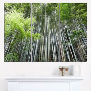 Dense Bamboo Forest of Japan - Forest Glossy Metal Wall Art - 36Wx28H