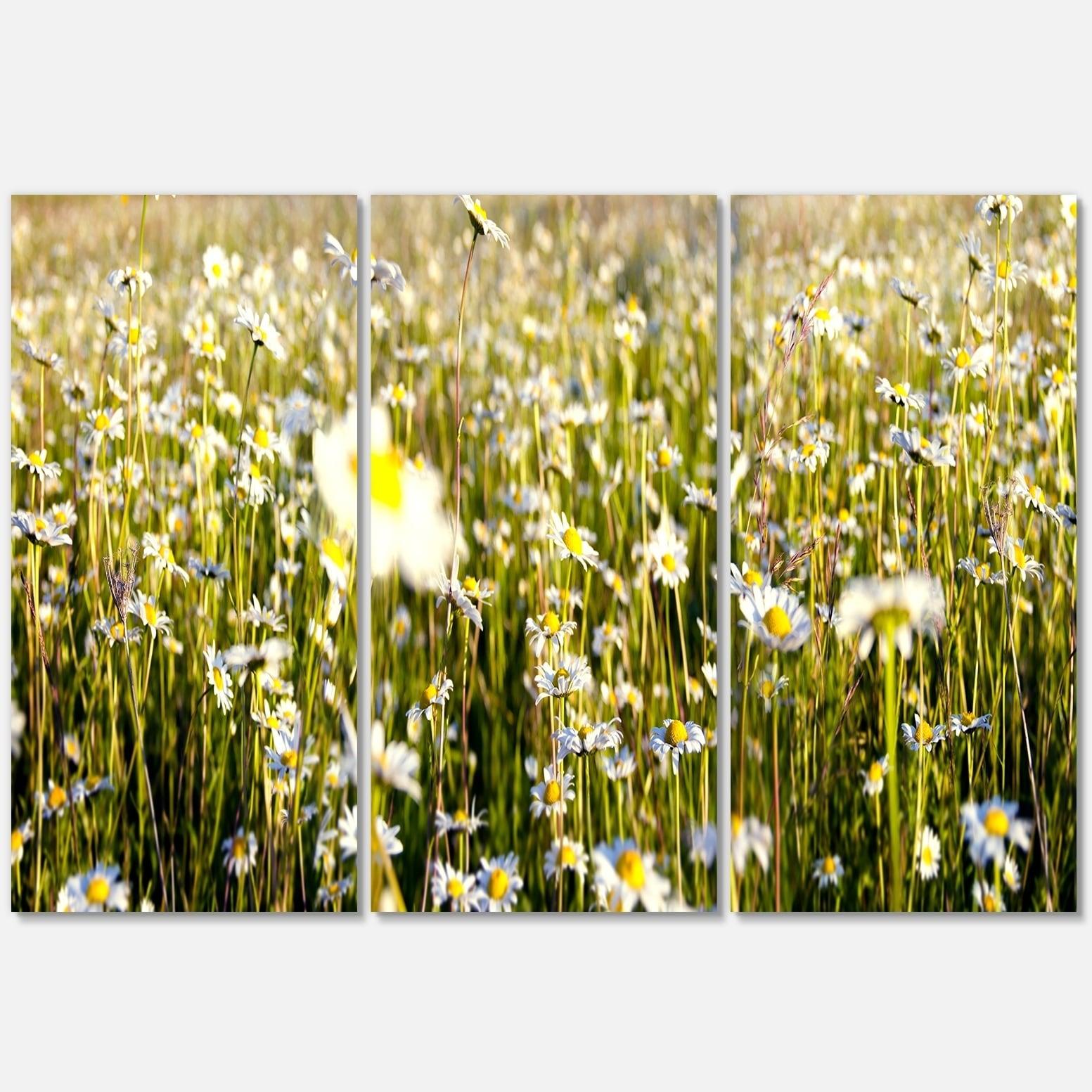 Wild Chamomile Flowers Field - Flower Large Metal Wall Art - 36Wx28H ...
