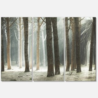 Maritime Pine Tree Forest with Rays - Oversized Forest Glossy Metal Wall Art - 36Wx28H