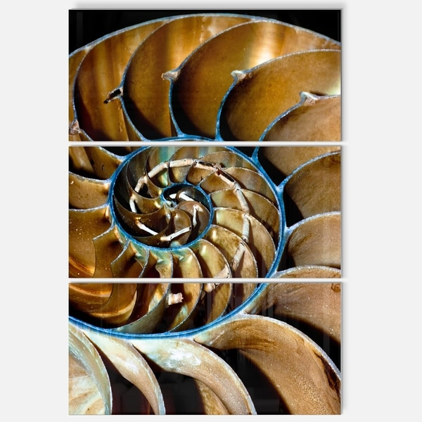 Shop Brown Large Nautilus Shell Abstract Art Glossy