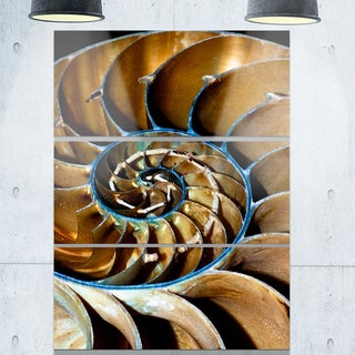 Brown Large Nautilus Shell - Abstract Art Glossy Metal Wall Art
