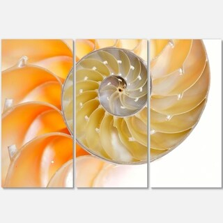 Isolated Nautilus Shell - Abstract Art Glossy Metal Wall Art