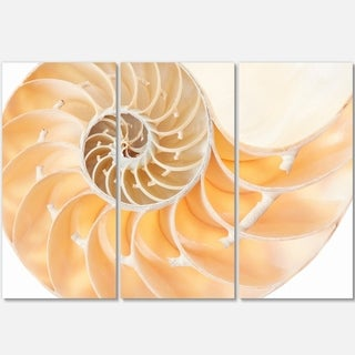 Light Brown Nautilus Shell - Abstract Art Glossy Metal Wall Art