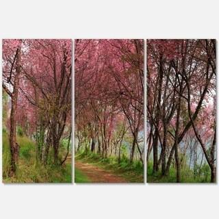 Sakura Pink Flowers in Thailand - Landscape Glossy Metal Wall Art - 36Wx28H