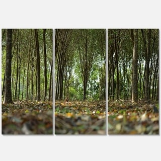 Dense Rubber Tree Plantation - Landscape Glossy Metal Wall Art - 36Wx28H