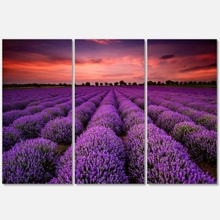 Red Sunset Over Lavender Field - Extra Large Glossy Metal Wall Art - 36Wx28H Landscape