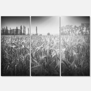 Black and White Wheat Field - Landscape Glossy Metal Wall Art - 36Wx28H