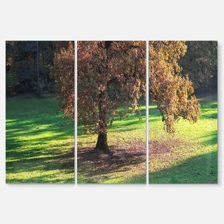 Lonely Beautiful Autumn Tree - Landscape Glossy Metal Wall Art - 36Wx28H