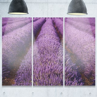 Endless Rows of Lavender Field - Oversized Landscape Glossy Metal Wall Art - 36Wx28H