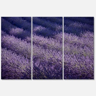 Lavender Field and Ray of Light - Oversized Landscape Glossy Metal Wall Art - 36Wx28H