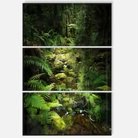 Designart - Green Forest of New Zealand - Landscape Photo Glossy Metal Wall Art