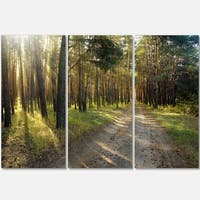 Designart - Road Through Green Pine Forest - Landscape Photo Glossy Metal Wall Art