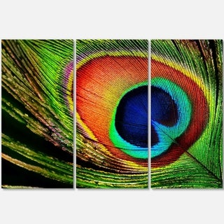 Designart - Peacock Feather - Photography Glossy Metal Wall Art