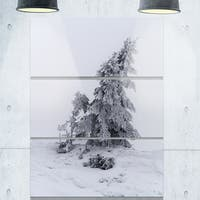 Designart - Grayscale Valley in Frost - Landscape Photo Glossy Metal Wall Art