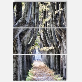 Designart - Tree Outside Lucca Italy - Landscape Photo Glossy Metal Wall Art