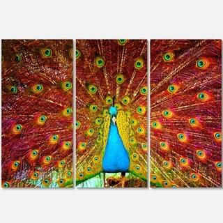 Designart - Peacock Dancing - Animal Photography Glossy Metal Wall Art