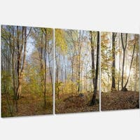 Designart - Green Autumn Forest in Morning - Landscape Photo Glossy Metal Wall Art