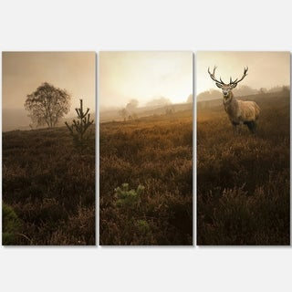 Designart - Mist Forest with Red Deer Stag - Landscape Photo Glossy Metal Wall Art