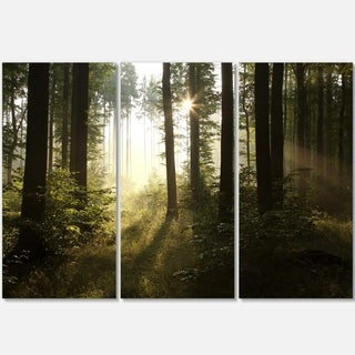 Designart - Early Morning Sun in Misty Forest - Landscape Photo Glossy Metal Wall Art