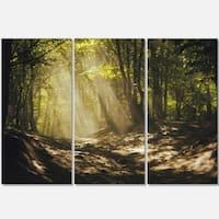Designart - Sun Rays Through Green Trees - Landscape Photo Glossy Metal Wall Art