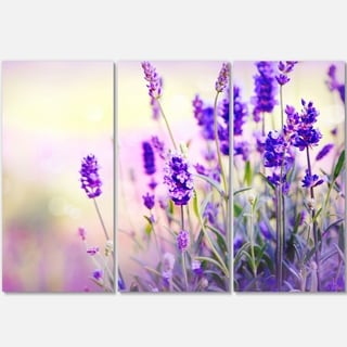 Designart - Purple Lavender Field - Floral Photography Glossy Metal Wall Art