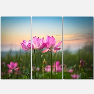 Designart - Blooming Lotus Flowers at Sunset - Floral Photo Glossy Metal Wall Art