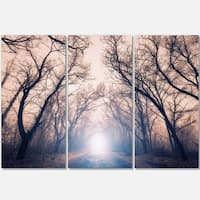 Designart - Mysterious Sunlight in Forest - Landscape Photo Glossy Metal Wall Art
