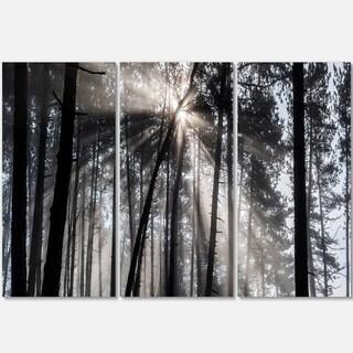 Designart - Sunbeams through Black White Forest - Forest Glossy Metal Wall Art