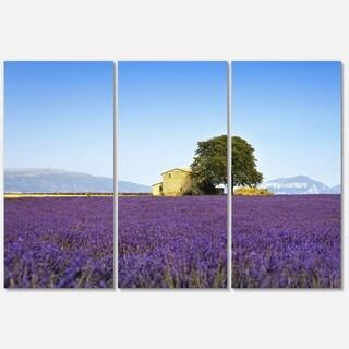 Designart - Lavender Flowers Blooming Field - Oversized Landscape Glossy Metal Wall Art