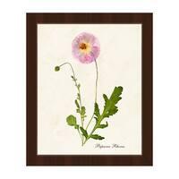 'Flower Papaver Rhoeas' Framed Canvas Wall Art