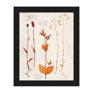 'Dry Floral Specimens' Framed Canvas Wall Art