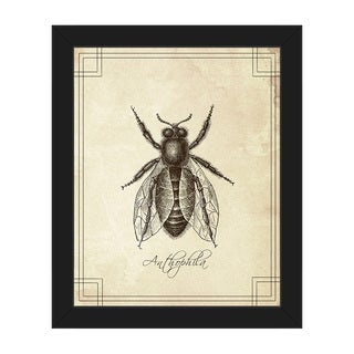 'Anthophila' Framed Canvas Wall Art