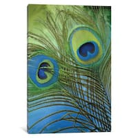 iCanvas Peacock Candy I by Color Bakery Canvas Print