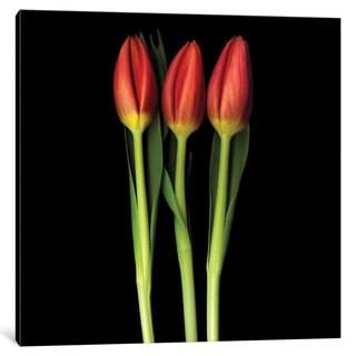 iCanvas Red Tulip Trinity by Magda Indigo Canvas Print