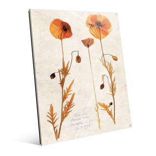 Dry Poppy' Acrylic Wall Art