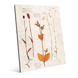 Dry Floral Specimens' Acrylic Wall Art