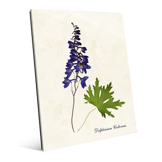 Flower Delphinium Cultorum Acrylic Wall Art